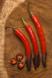 Red chilli pepper with dark chocolate Royalty Free Stock Photo