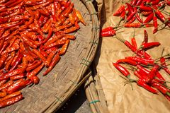 Red chilli pepper Stock Photography