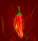 Red chilli pepper in fire. On dark red background Royalty Free Stock Images