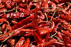 Red Chilli Pepper. Is a main food ingredient and part of Indian spices  some times known as Red Hot Chilli because of its taste. It belongs to Capsicum family Royalty Free Stock Photo