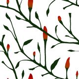 Red Chilli Pepper Plant Seamless Pattern Royalty Free Stock Photography