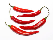 Red chilli peppers. On white royalty free stock photos