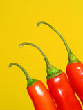 Red chilli peppers royalty free stock photos
