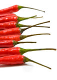 Red chilli peppers. Red chili peppers on white background stock photography