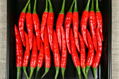 Red chilli peppers. Royalty Free Stock Image