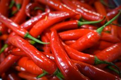 Red chilli. Background spices The spicy royalty free stock images