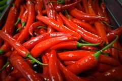 Red chilli. Background spices The spicy royalty free stock photo