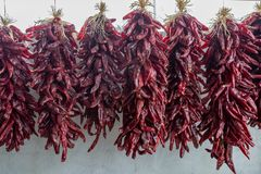 Red Chilli Ristras royalty free stock photo