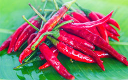 Red chilli is very hot in thai food Stock Images