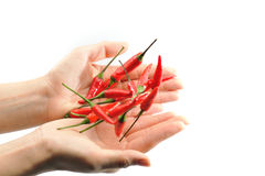 Red chillies 3 Royalty Free Stock Images