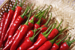 Red chillies Stock Images