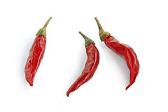 Red Chillies. Stock Images