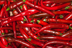 Red chillies background. Pile Royalty Free Stock Image