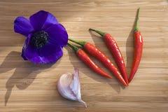 Red chillies  dark blue Anemone Royalty Free Stock Photos