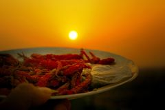 Red chillies dried in India with sunset royalty free stock photo