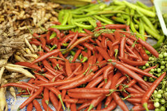 Red chillies green chillies for cooking Royalty Free Stock Image