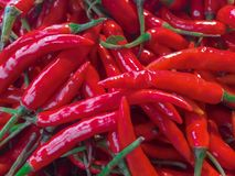 Red chillies. Group of red chillies for cooking Stock Images