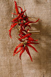 Red chillies tied by rope  hessian backround Stock Photography