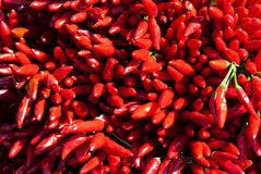 Red chillis Royalty Free Stock Photo