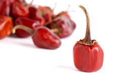 Red chilly Stock Photography