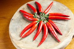 Red chilly pepper Stock Images