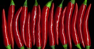 Red chily peppers Stock Images