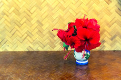 Red China Rose flower Chinese hibiscus flower, Hibiscus rosa-si Stock Photo