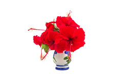 Red China Rose flower Chinese hibiscus flower isolated on white Stock Photography