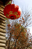 Red Chinese lantern Stock Photos