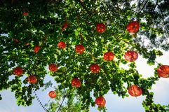 Red Chinese lanterns on a green tree, Thailand stock photos