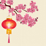 Red Chinese lanterns hanging on a branch of cherry blossoms with purple flowers. Royalty Free Stock Photos