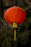 Red Chinese Paper Lantern Royalty Free Stock Images