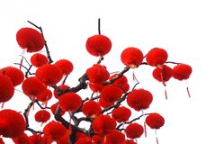 Red Chinese Paper Lanterns On Tree Royalty Free Stock Photos