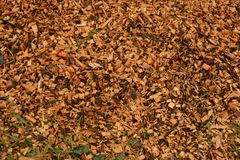 Red Chips. Wood chips from chain saw Royalty Free Stock Photo