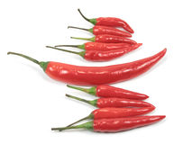 Red Chli pepper standout. A red chili pepper standout in the group, isolated Royalty Free Stock Images