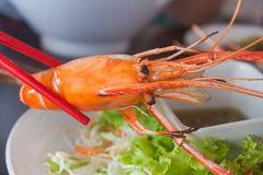 Red chopsticks holding a prawn. Royalty Free Stock Image