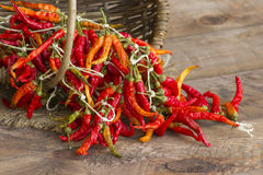 Red chot chili peppers Stock Image