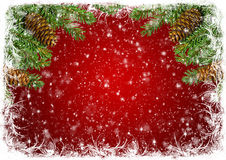 Red Christmas background with white frost and branches of spruce Royalty Free Stock Image