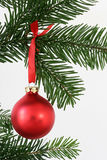 Red christmas ball. Red bauble hanging on christmas tree Royalty Free Stock Image