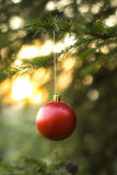 Red Christmas ball. Hanging on pine tree branch. Soft focus and shallow DOF Stock Photo