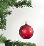 Red christmas ball. Hanging from a branch Stock Photos