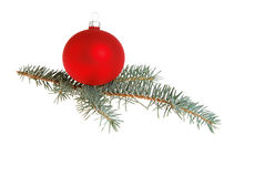 Red Christmas Ball. Red Xmas ball on Blue Spruce (Picea pungens) sprig Royalty Free Stock Image