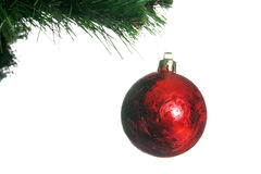 Red christmas ball in fir Stock Images
