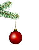 Red  christmas ball and fir. Red christmas ball with fir branch Royalty Free Stock Images