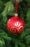 Red christmas ball on fir branch Stock Photo