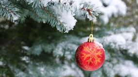 Red Christmas ball on the fir branch covered with snow. Christmas background. Red Christmas Ball Hanging on a Tree Branch in the Snow Winter Forest stock video