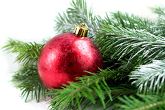 Red christmas ball and fir branch on white background. Christmas decoration on white background Royalty Free Stock Photos