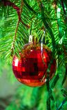 Red Christmas ball on fir branches_2 Stock Images