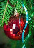 Red Christmas ball on fir branches_3 Stock Images