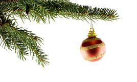 Red Christmas Ball on fir tree. Red xmas ball hanging on fir tree twig isolated on white background Royalty Free Stock Images